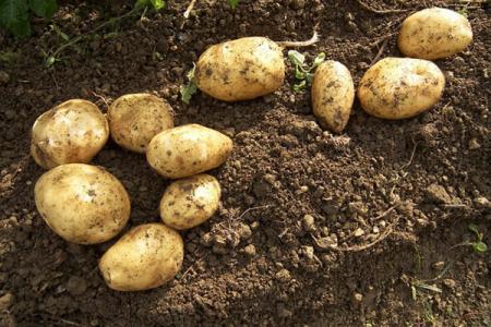 火星可以种植土豆.jpg