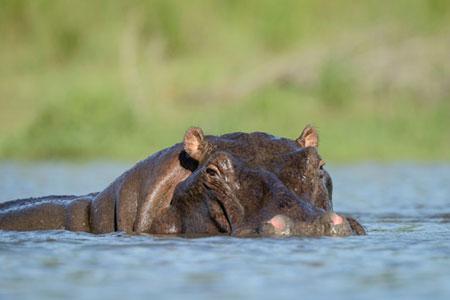 南非有很多种动物.你听说过南非五大动物吗?