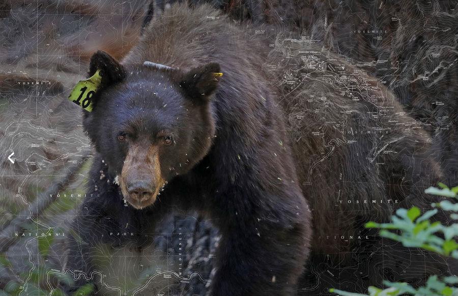 在线追踪熊踪迹.png