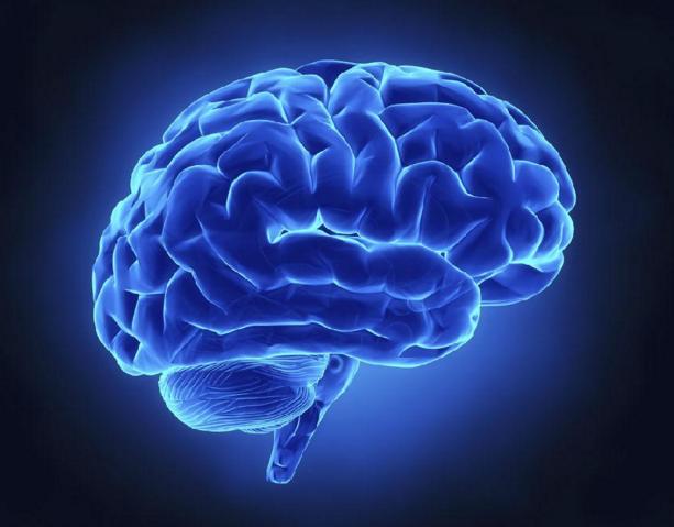 大脑与计算机很相似