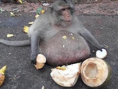 胖猴的图片大全可爱