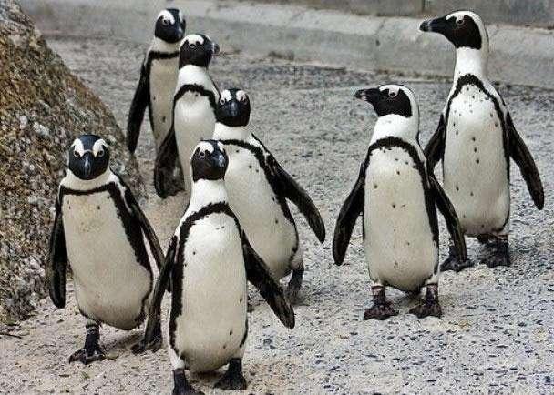 非洲企鹅.jpg