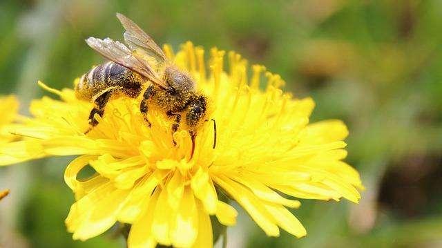 蜜蜂授粉.jpg