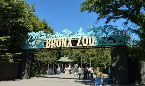布朗克斯动物园.jpg