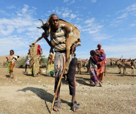 干旱和饥荒威胁着索马里牧民的生活