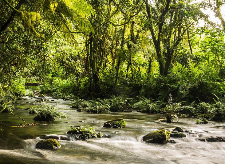 研究项目资助乌干达农民护林.jpg