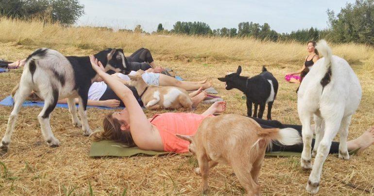 能一起练习,还有和小山羊一起玩,有的山羊宝宝真的是太可爱了.