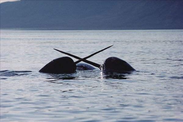 壁纸 动物 鲸鱼 600_400