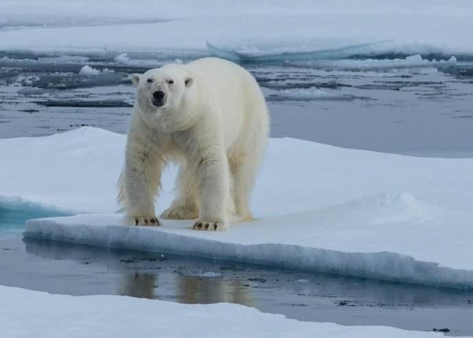 浮冰上的北极熊.jpg