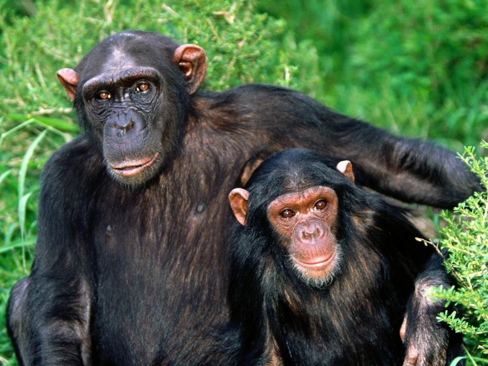 电动猩猩的工作原理是什么_猩猩发型是什么意思