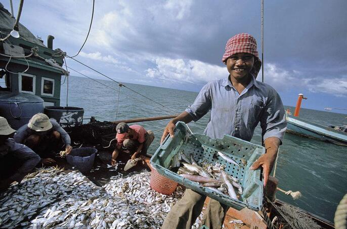 柬埔寨捕鱼.jpg