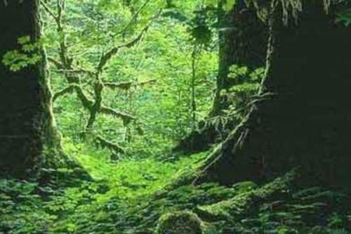 热带雨林保护.jpg