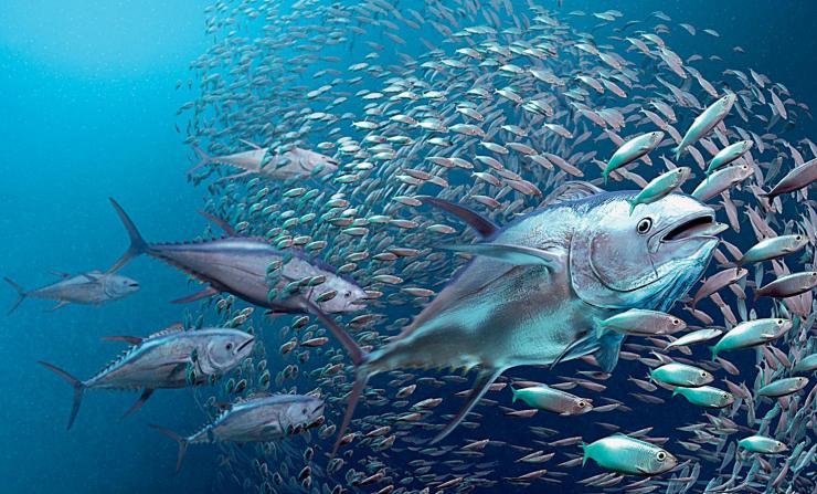 壁纸 海底 海底世界 海洋馆 水族馆 桌面 740_447