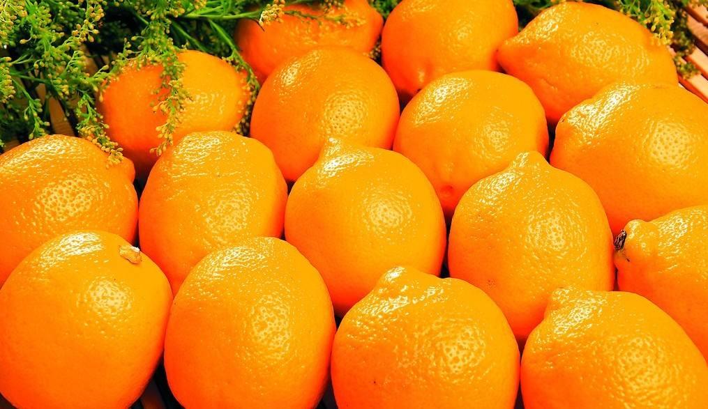 巴西和美国发现防治柑橘黄龙病分子.jpg