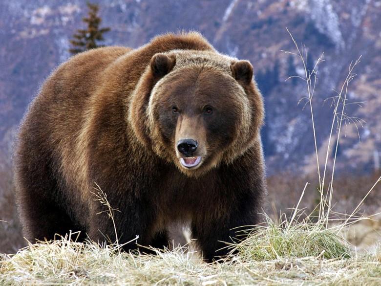 动物 熊科 780_585