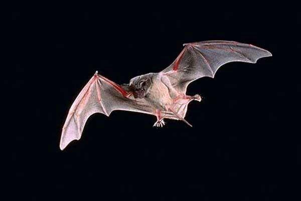 蝙蝠2.jpg