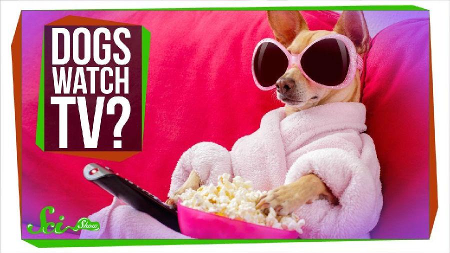 狗狗们所喜爱的电视节目