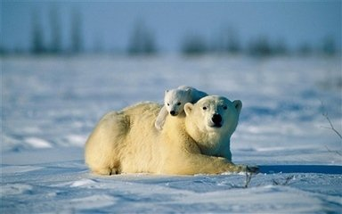 10件小事阻止全球变暖.jpg