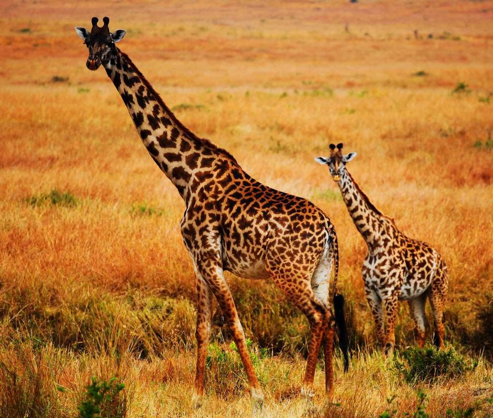 战争致非洲大型动物数量锐减.jpg