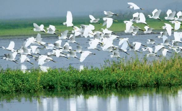 东洞庭湖国家级自然保护区.jpg