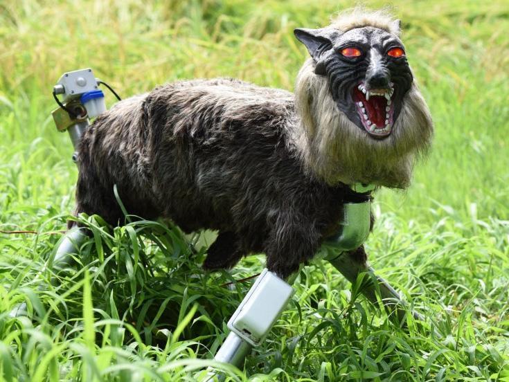 日本超级怪兽狼保卫农作物
