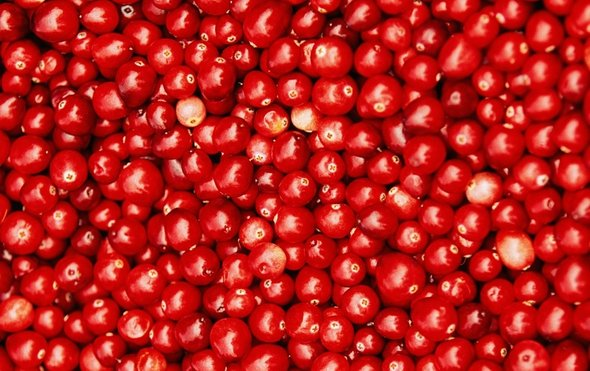 蔓越莓1.jpg
