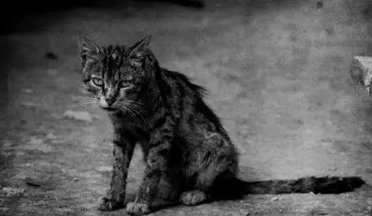 一只猫教会我如何去爱