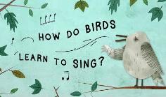 鸟类的鸣唱