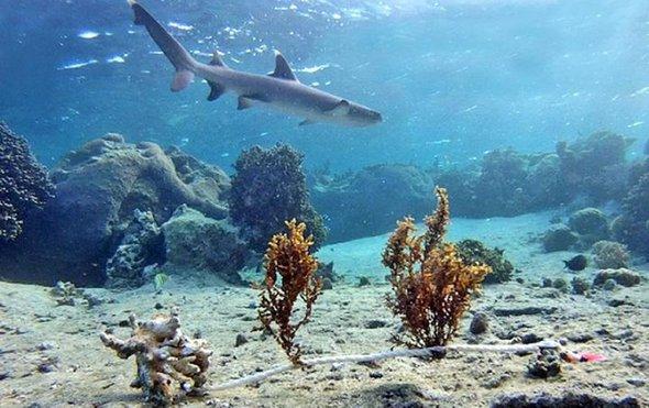 鲨鱼和珊瑚礁.jpg