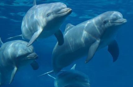 海豚1.JPEG