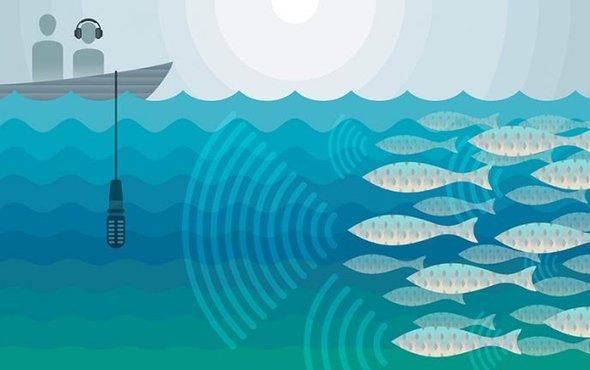 石首鱼发出破坏性分贝的声音.jpg