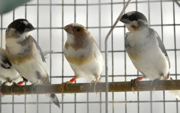 雀鸟.jpg