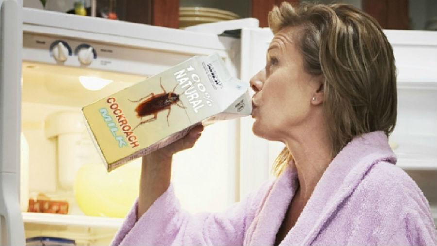 蟑螂奶 要来一杯么