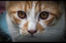 猫发出的呼噜声