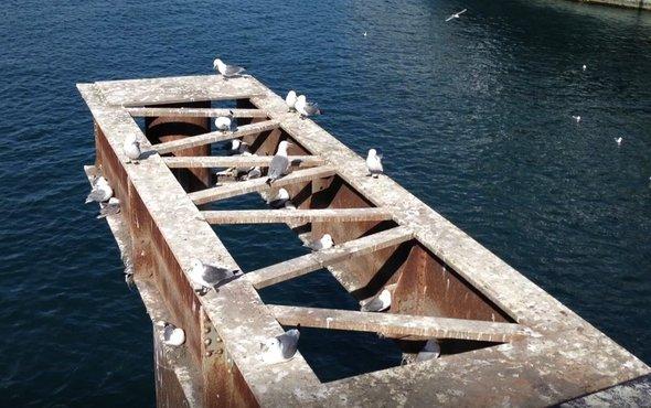 海鸟羽毛揭示海洋的复原能力.jpg