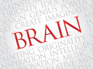 与大脑相关的词汇