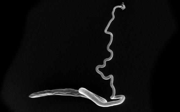 肠道寄生微生物.jpg