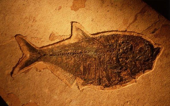 腐肉有助于研究石化现象.jpg