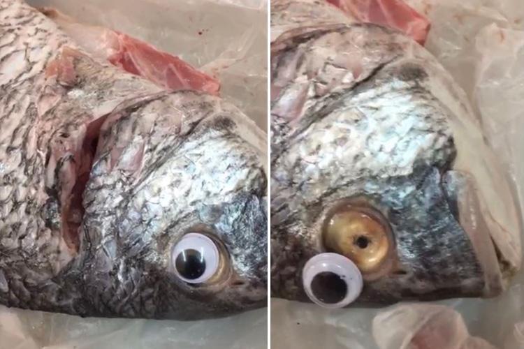 科威特鱼贩为鱼粘上塑料假眼睛'装新鲜'