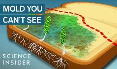 高温并不能消灭霉菌毒素