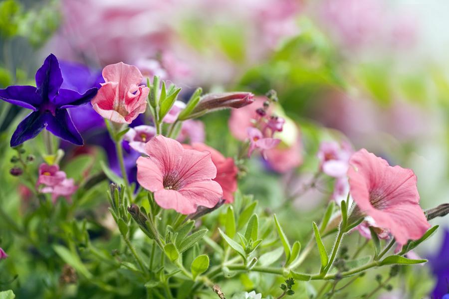Indoor plants moisturize your skin in winter/冬季室內植物會濕潤你的皮膚-華夏娛樂360