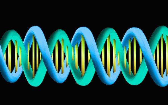 基因.jpg