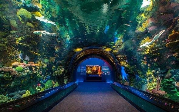 纽约水族馆.jpg