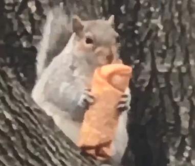 可爱纽约小松鼠吃蛋卷视频萌翻网友