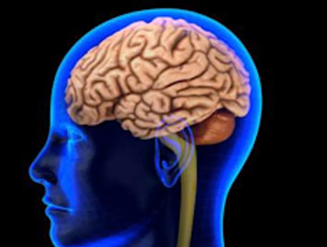 随着年龄的增长大脑会萎缩