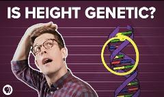 身高与基因的关系