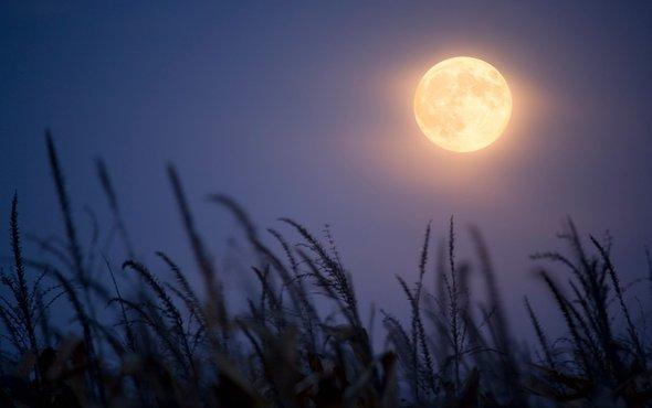 哺乳动物选择夜间活动.jpg