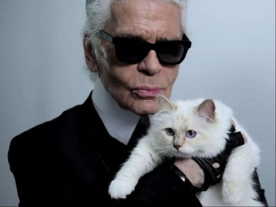 围观一只猫的奢侈生活.png
