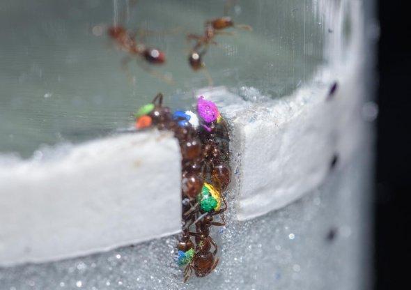 蚂蚁1.jpg