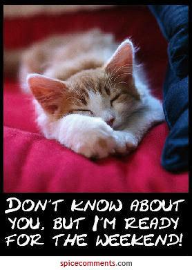 郁闷小猫的图片可爱
